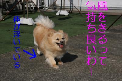 IMG_8480_convert_20110506114752.jpg