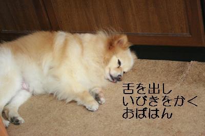 IMG_8530_convert_20110506114827.jpg