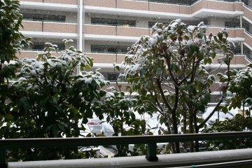 20110211yuki_1.jpg