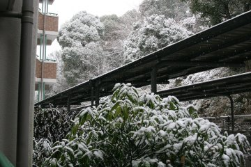 20110211yuki_2.jpg