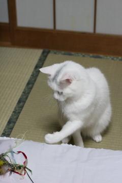 shiro11.jpg