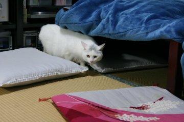 shiro70.jpg