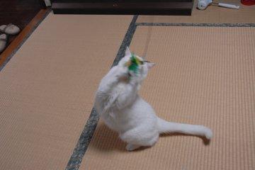 shiro88.jpg