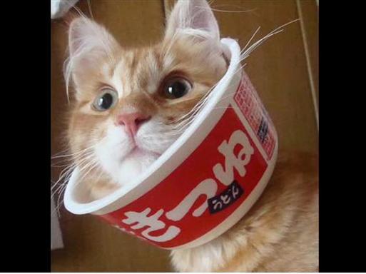 きつねて・・・猫やん