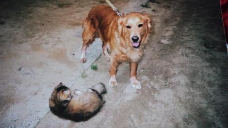 ペルシャと犬