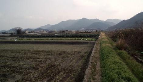 農道と田んぼ