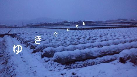 雪国レタス