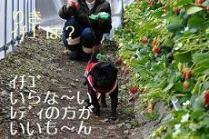 イチゴは?