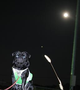 お月様と・・・