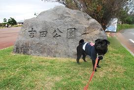 吉田公園だよ