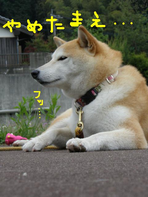 コピー ~ P5222729