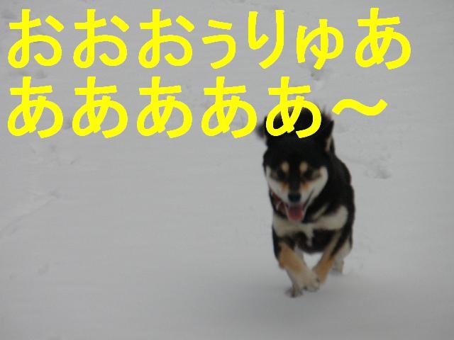 コピー ~ PC273413