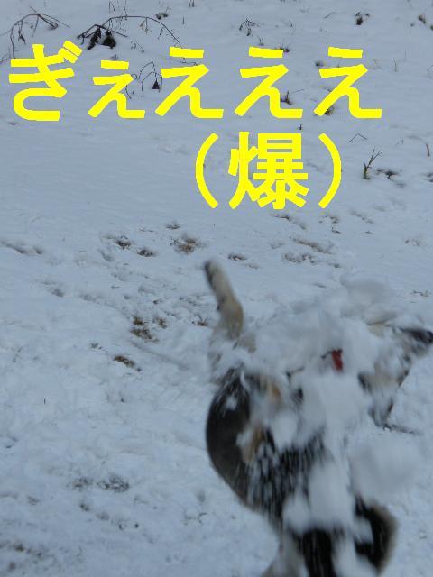 コピー ~ PC273434
