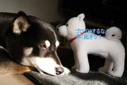 DSC09170_Rく