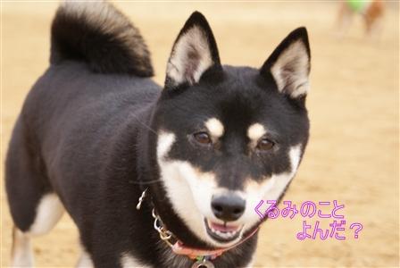 DSC09347_Rく