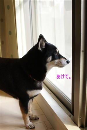 くるみ (36)