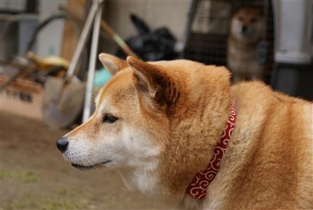 茨城県 庭 006_R