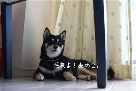 DSC00712_Rく
