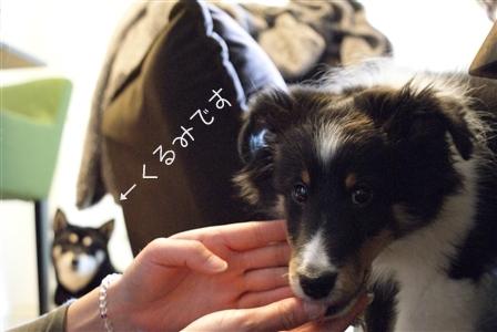 DSC00669_Rく