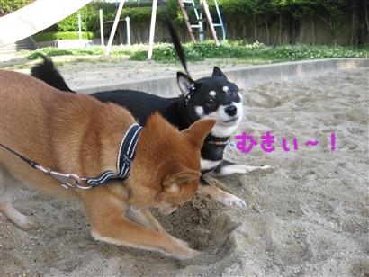 IMG_1729_Rく