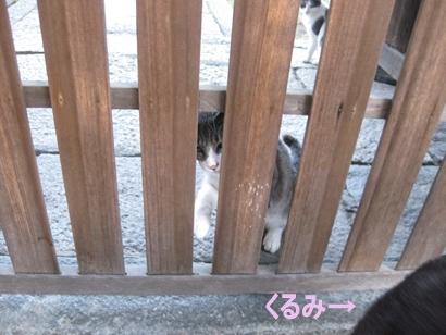 IMG_2196_Rく