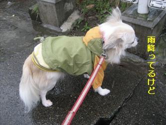 雨降ってるけど