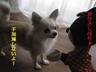 ミニーちゃん1