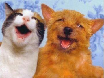犬と猫が超笑顔