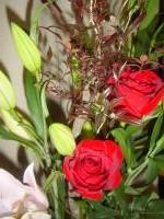 正月の花1