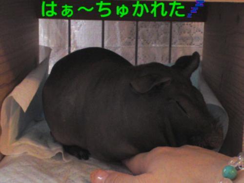 y_tsukareta.jpg