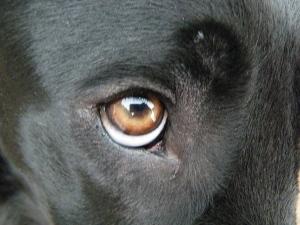 IMGP0757dillの目