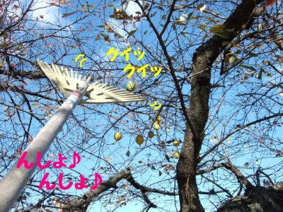 20091118-2.jpg