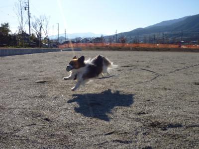 2009127-11.jpg