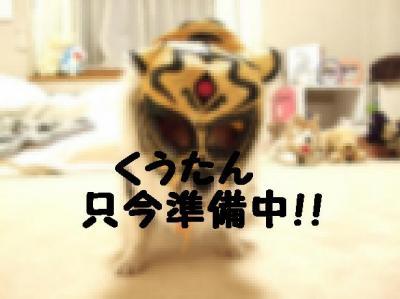 タイガーくうさん
