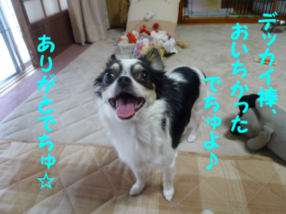 20101018-15.png