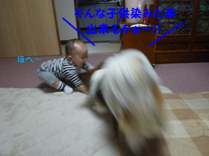 20101018-4.png