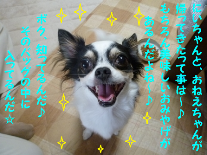 20101018-7.png
