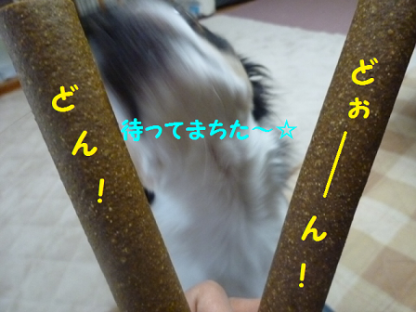 20101018-9.png