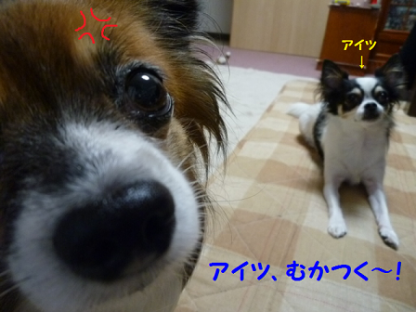 20101022-5.png