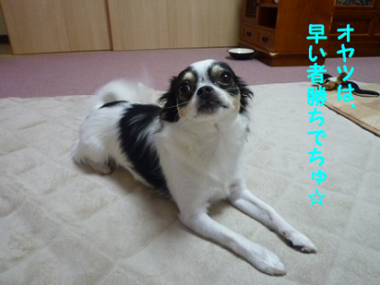 20101022-7.png