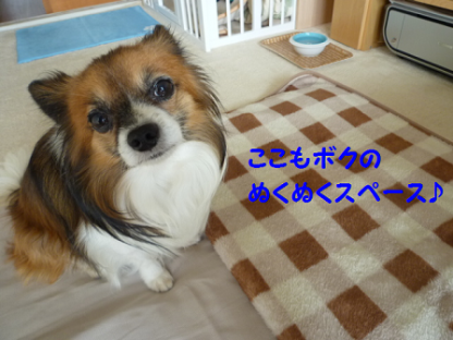 20101028-6.png