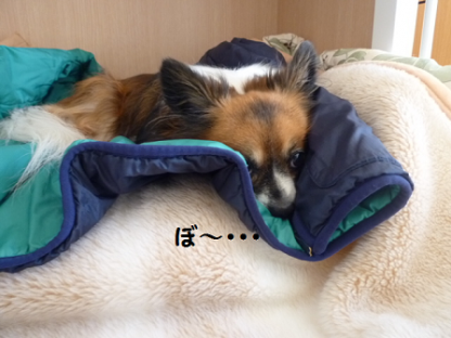 20101028-8.png