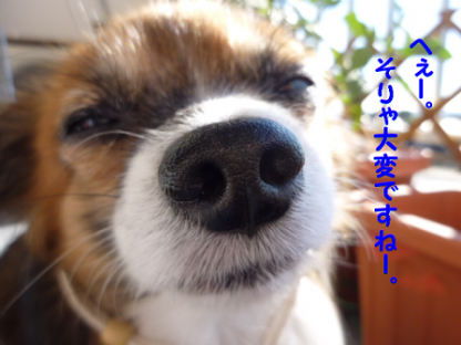 20101112-1.png