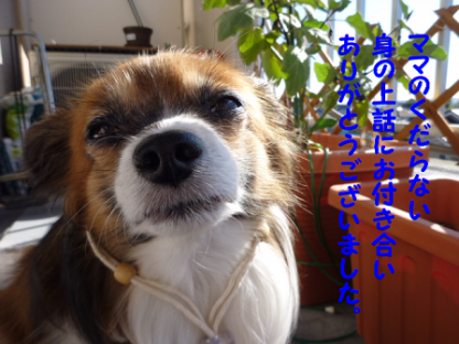 20101112-4.png