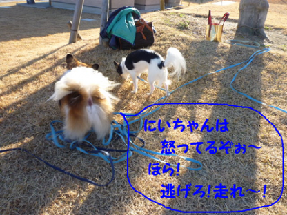 20101121-19.png