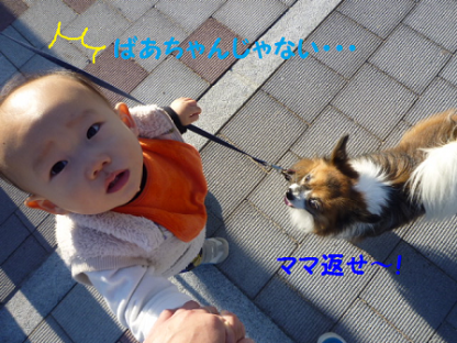 20101121-24.png