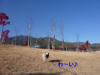20101121-2.png
