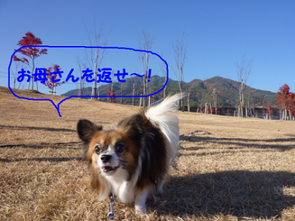20101121-33.png