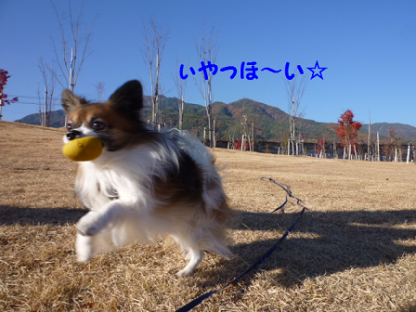 20101121-3.png