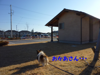 20101121-5.png